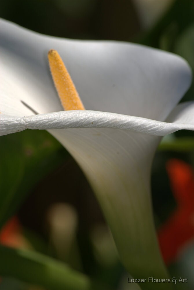 Elegant Nature by Lozzar Flowers & Art