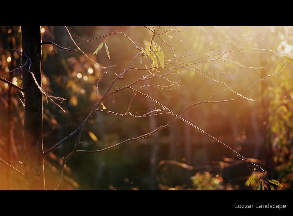 Evening Sunlight by Lozzar Landscape