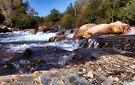 Beaver Lodge Trail Fly Fishing Area by Carolyn  Fletcher