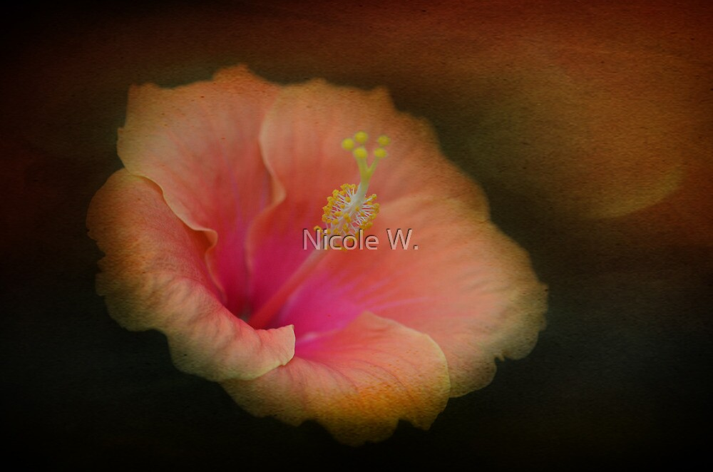 Hibiscus by Nicole W.
