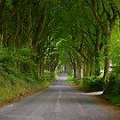 Summer Avenue by angelvixen
