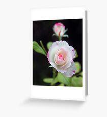 Pink Tint Greeting Card