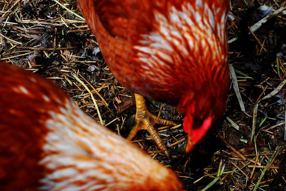 chicken scratch by Meredith Gardiner