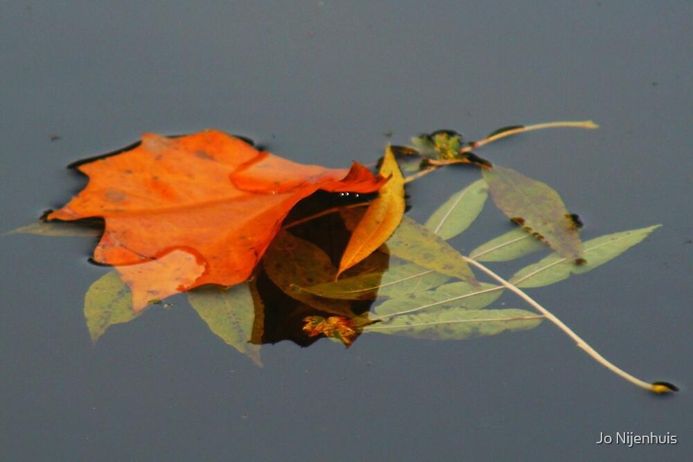Leaves Floating Away by Jo Nijenhuis