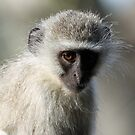 Monkey business-showing my dark side! by Anthony Goldman