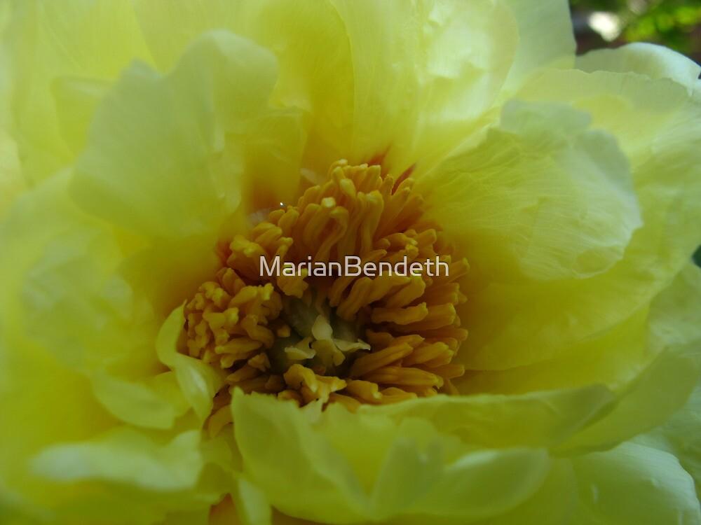 Elegant Canary Yellow by MarianBendeth