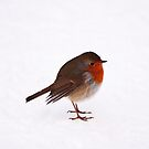 Winter robin by Skye Hohmann