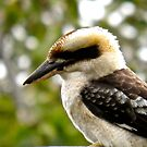 Kookaburra by Michelle Ricketts