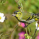 Getting the Bird by kibishipaul