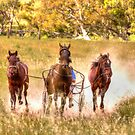 Dust What Dust  ~ Horses ~ Rural NSW Australia  by Kym Bradley