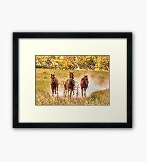 Dust What Dust  ~ Horses ~ Rural NSW Australia  Framed Print