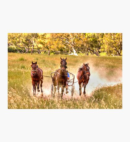 Dust What Dust  ~ Horses ~ Rural NSW Australia  Photographic Print