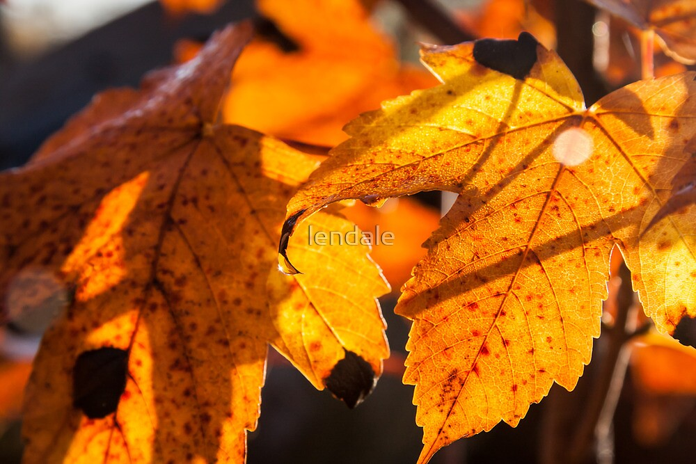 Autumn Leaves by lendale