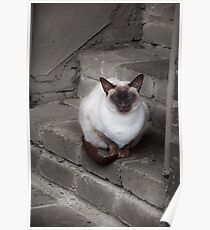 Cat on the Back Step Poster