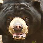 Big Black Bear Up Close by mamasita