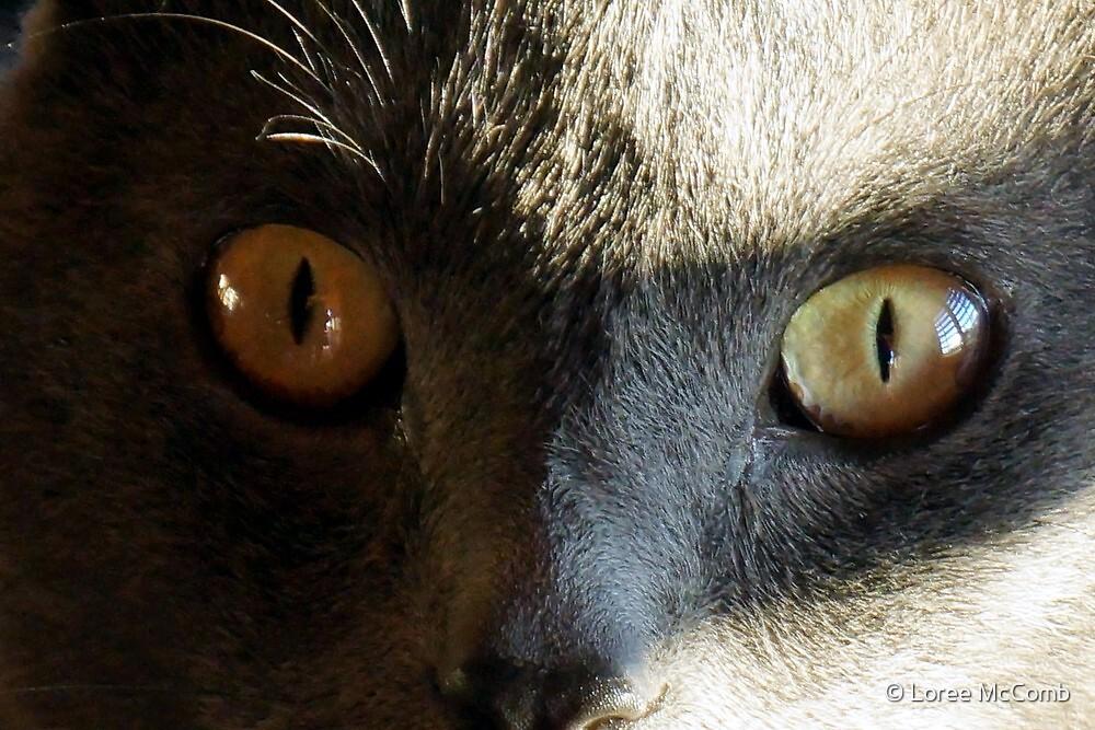 Cat Eyes by © Loree McComb