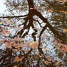 Reflection by Jess Meacham