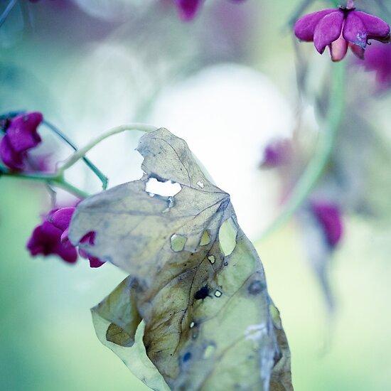 late autumn by Alina Uritskaya