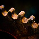 Old, rusty cogwheel by marina63