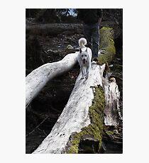 Luna at Bear Creek Photographic Print