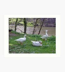 Riverside Geese  Art Print