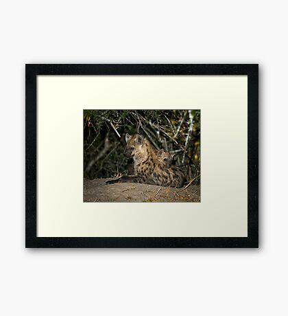 Hyena Den Framed Print