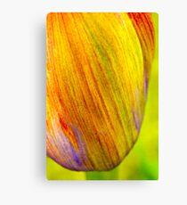 Agapanthus flowerhead Canvas Print