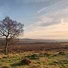 A Lonely Peak District Tree by LazloWoodbine