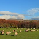 Winter Woolly Land by RoystonVasey