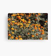 Tagetes Flowers Canvas Print