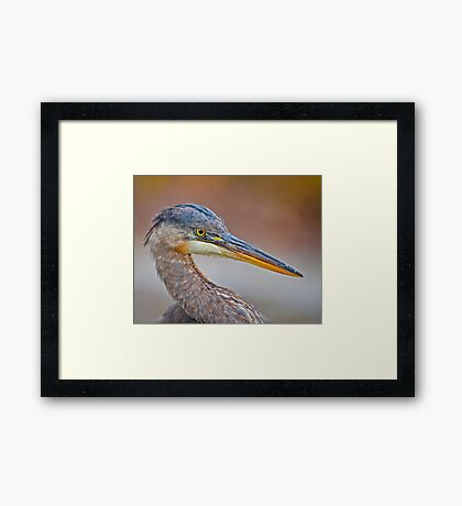 Colour me Blue Heron Framed Print