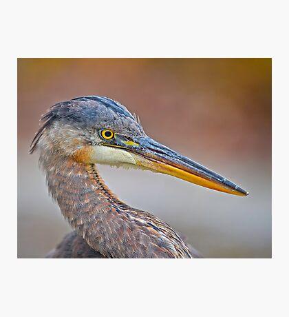 Colour me Blue Heron Photographic Print