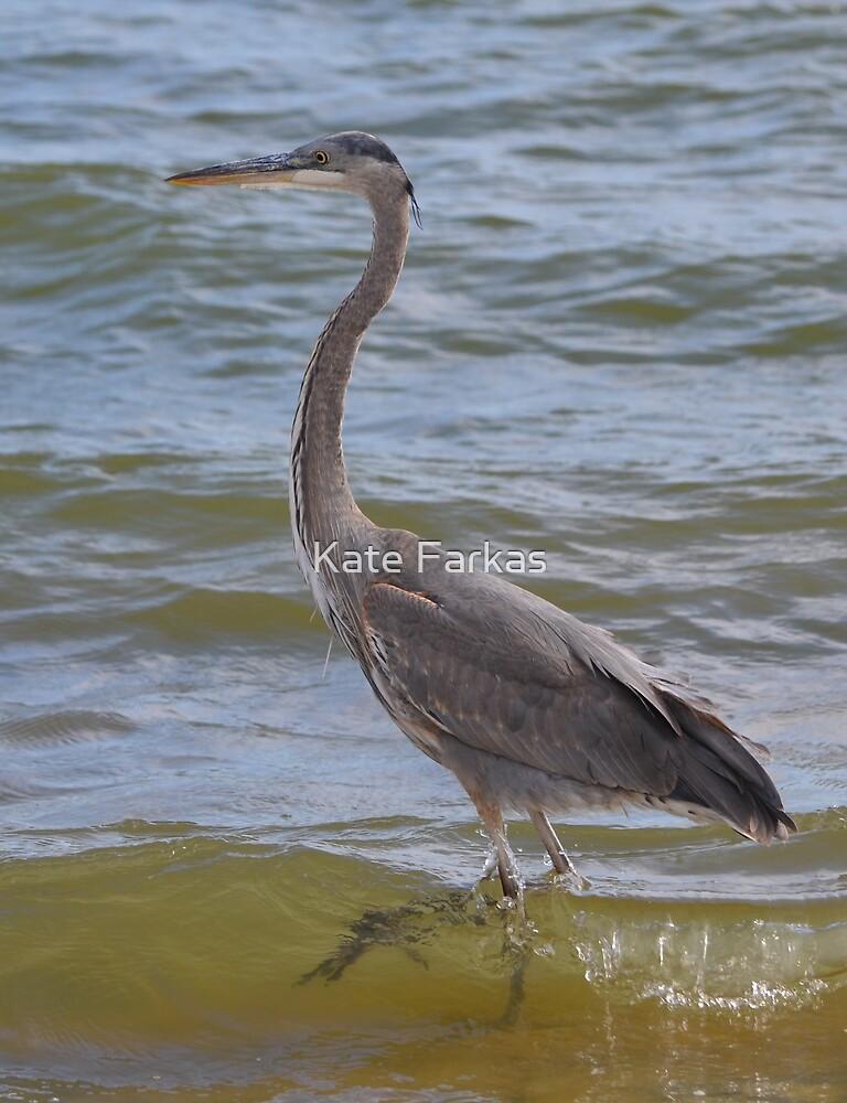 Blue heron strut by Kate Farkas