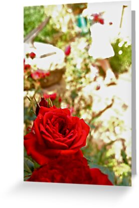 Red Roses by Michelle Ricketts