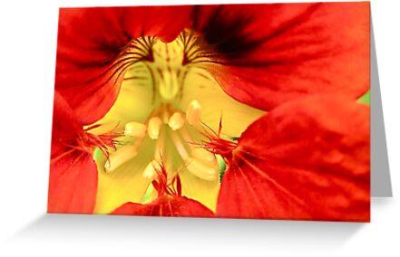 Red Nasturtium by Michelle Ricketts
