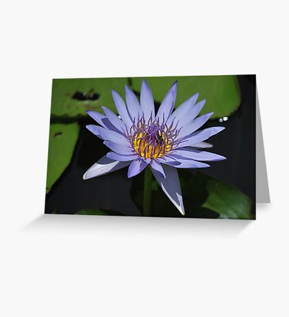 Shine Your Beauty Greeting Card