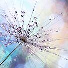 Sparkle Dandy by Amy Dee