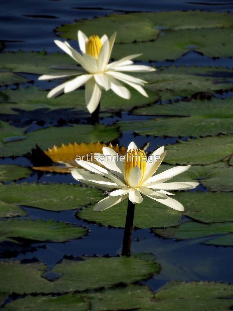 Pond Treasures ~ Part Thirteen by artisandelimage