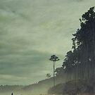 Bruce Bay by Jill Ferry