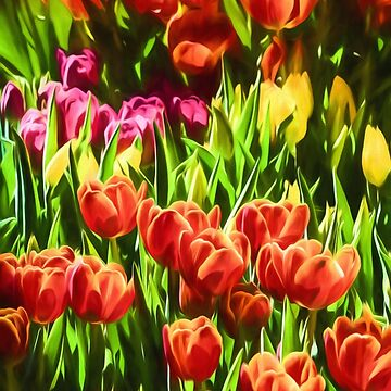 Coloured Tulips   (GO) by RayW
