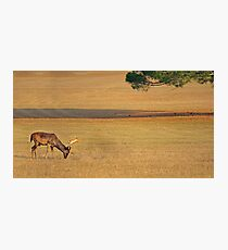 Deer on the grassland Photographic Print