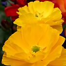 Double yellow Ranuncula by mooksool