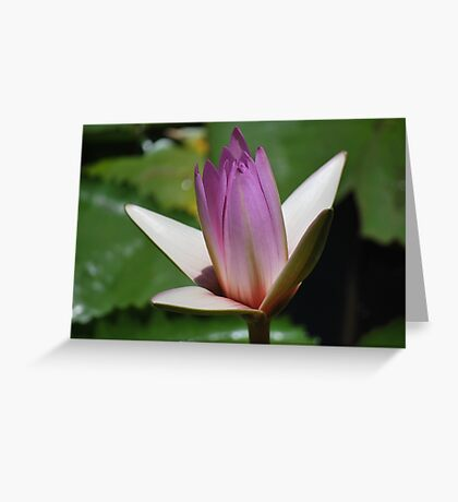 Opening Up Greeting Card