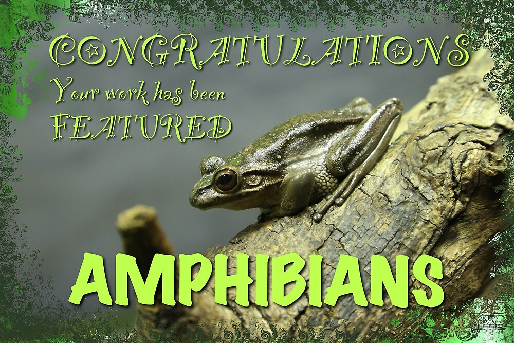 Amphibians Group Feature Bannner by diggle