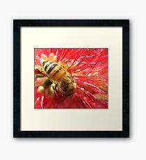 Bee Macro Framed Print