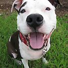 Sophe the Staffy by spanners79