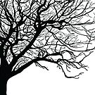 Tree Silhouette by Holly Watkins