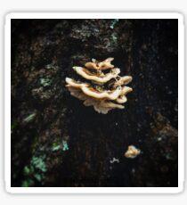 Shelf Mushroom On A Tree Sticker