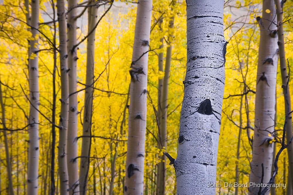 Fall Forest Aspens by John  De Bord Photography