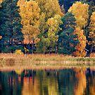 Autumn brilliance by LadyFi